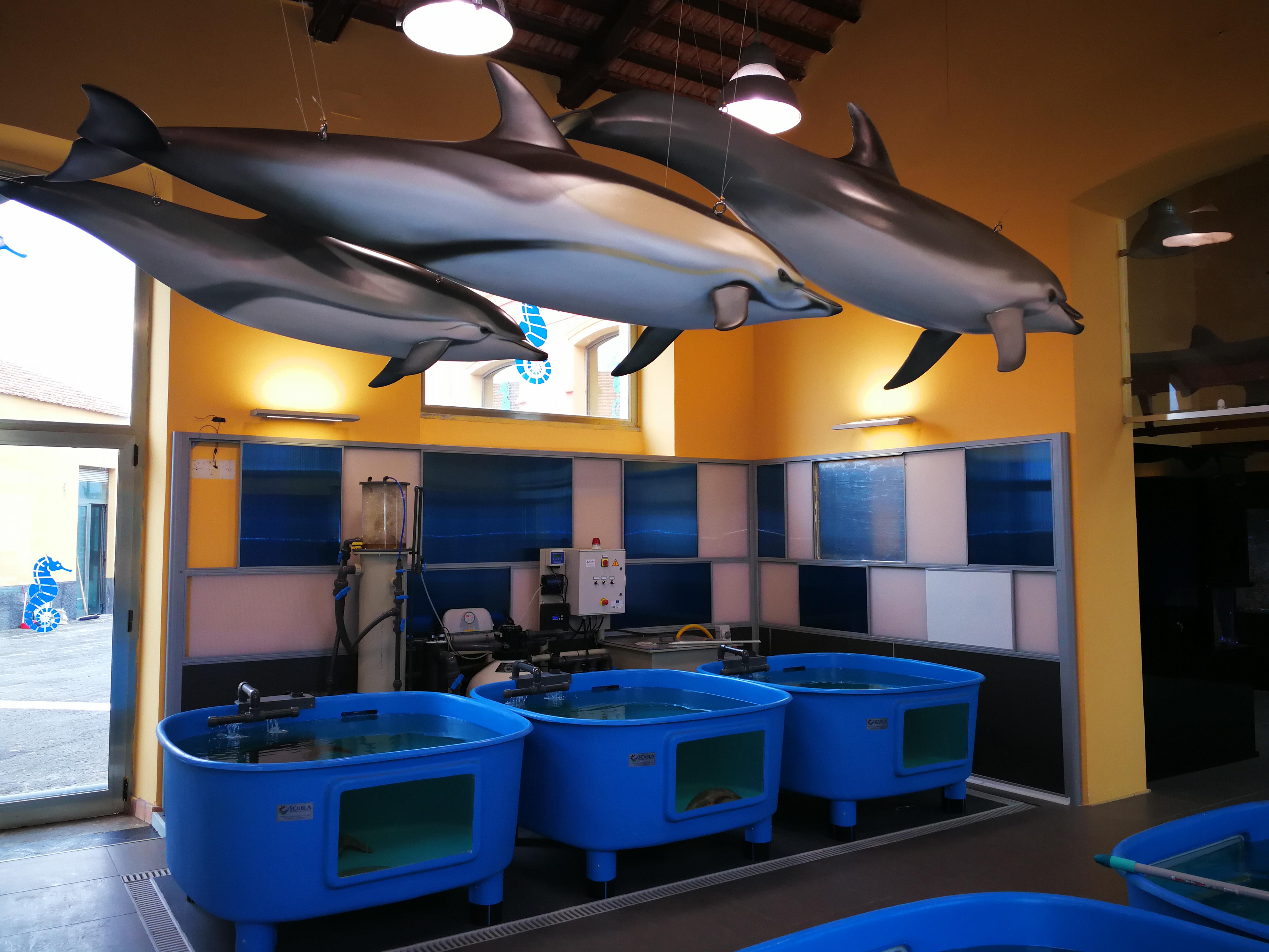 Centro ricerche tartarughe marine stazione zoologica for Acquario tartarughe grandi